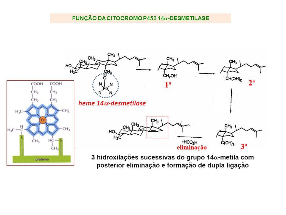 FUNÇÃO DA CITOCROMO P450 14-DESMETILASE