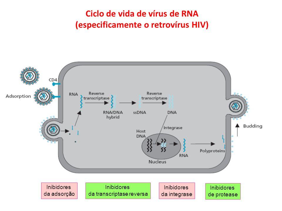 Ciclo de vida de vírus de RNA (especificamente o retrovírus HIV)