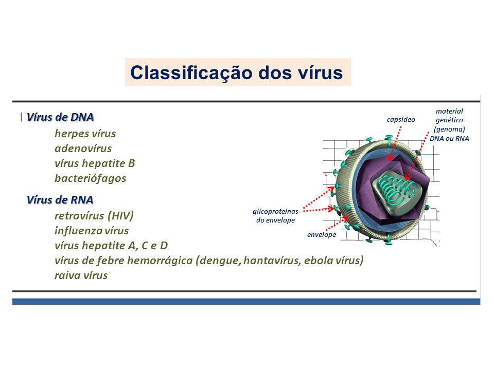 glicoproteínas do envelope