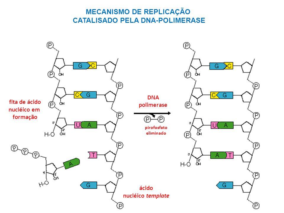 MECANISMO DE REPLICAÇÃO CATALISADO PELA DNA-POLIMERASE