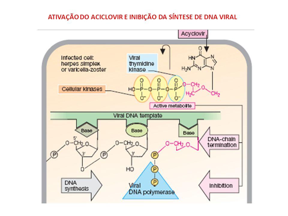ATIVAÇÃO DO ACICLOVIR E INIBIÇÃO DA SÍNTESE DE DNA VIRAL