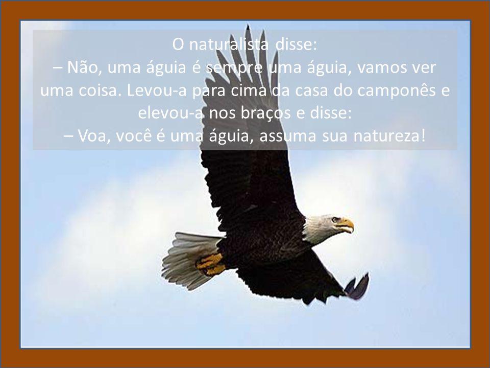 – Voa, você é uma águia, assuma sua natureza!