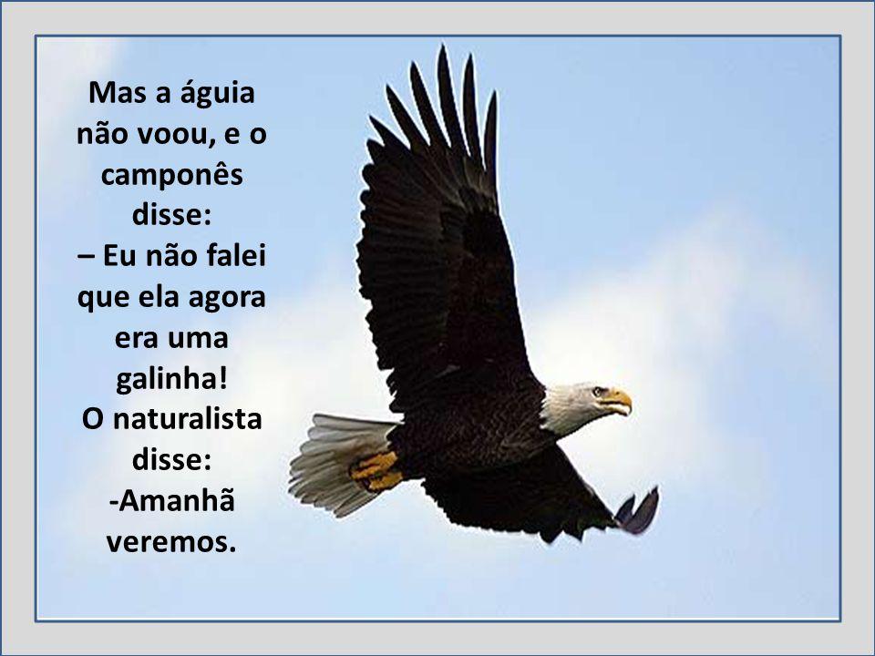 Mas a águia não voou, e o camponês disse: