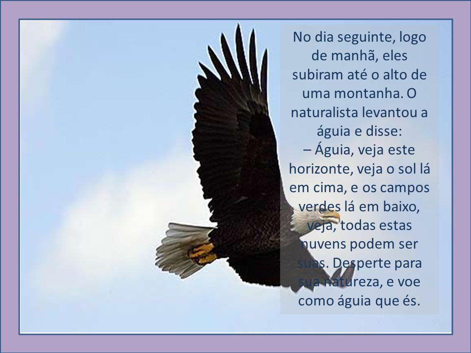 No dia seguinte, logo de manhã, eles subiram até o alto de uma montanha. O naturalista levantou a águia e disse: