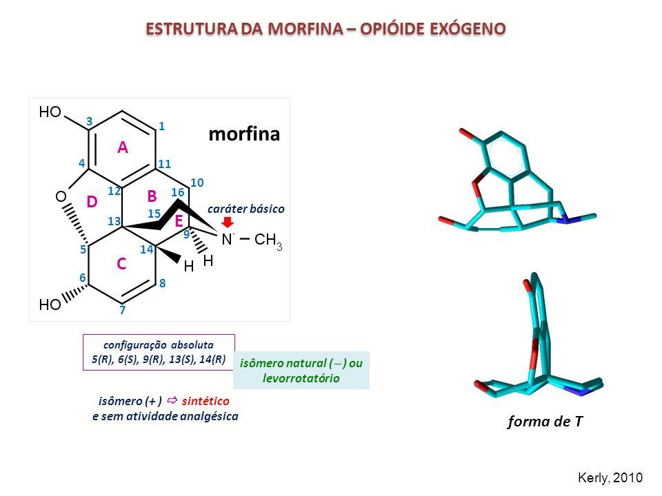morfina ESTRUTURA DA MORFINA – OPIÓIDE EXÓGENO A B D E C morfina 3D