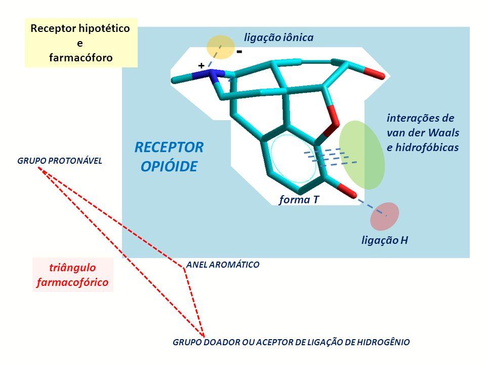 - RECEPTOR OPIÓIDE Receptor hipotético e ligação iônica farmacóforo +