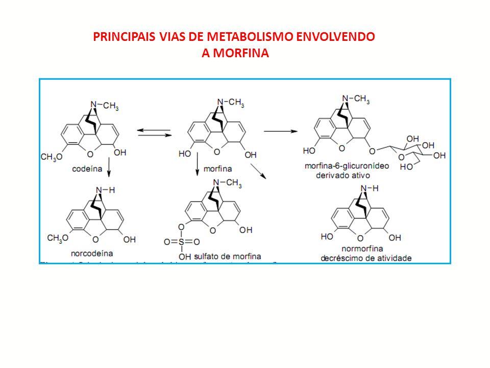 PRINCIPAIS VIAS DE METABOLISMO ENVOLVENDO