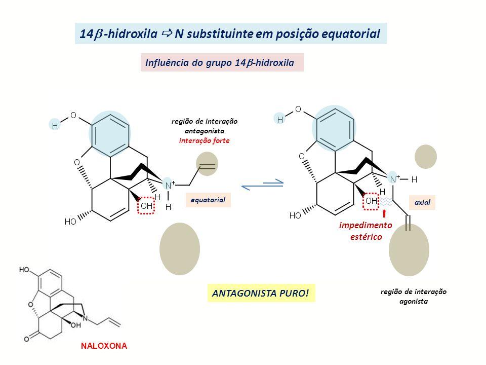 14 -hidroxila  N substituinte em posição equatorial