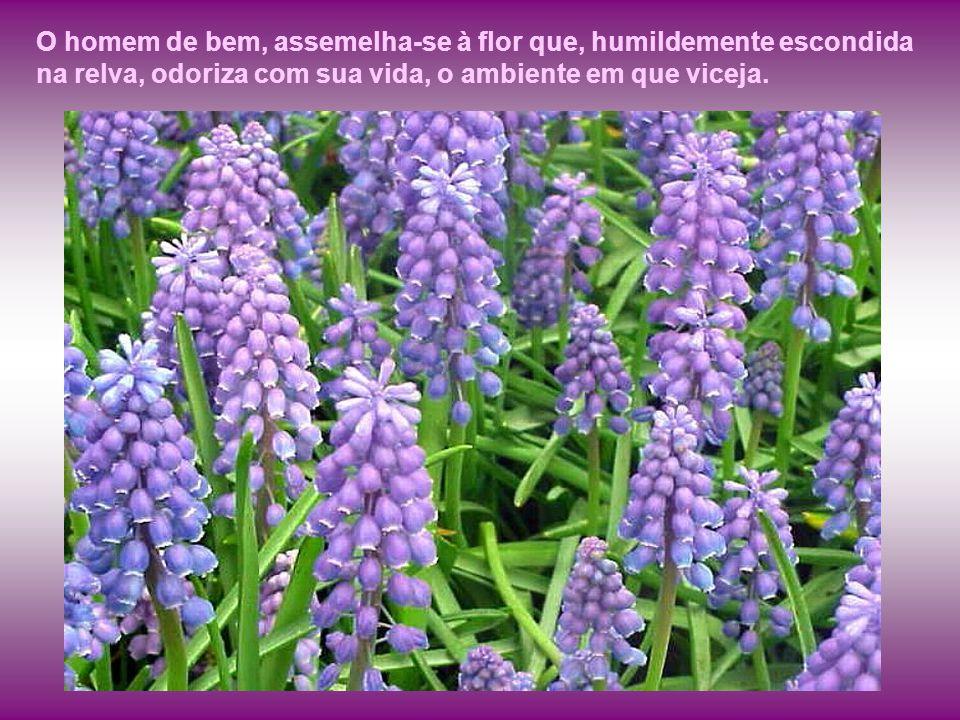 O homem de bem, assemelha-se à flor que, humildemente escondida na relva, odoriza com sua vida, o ambiente em que viceja.