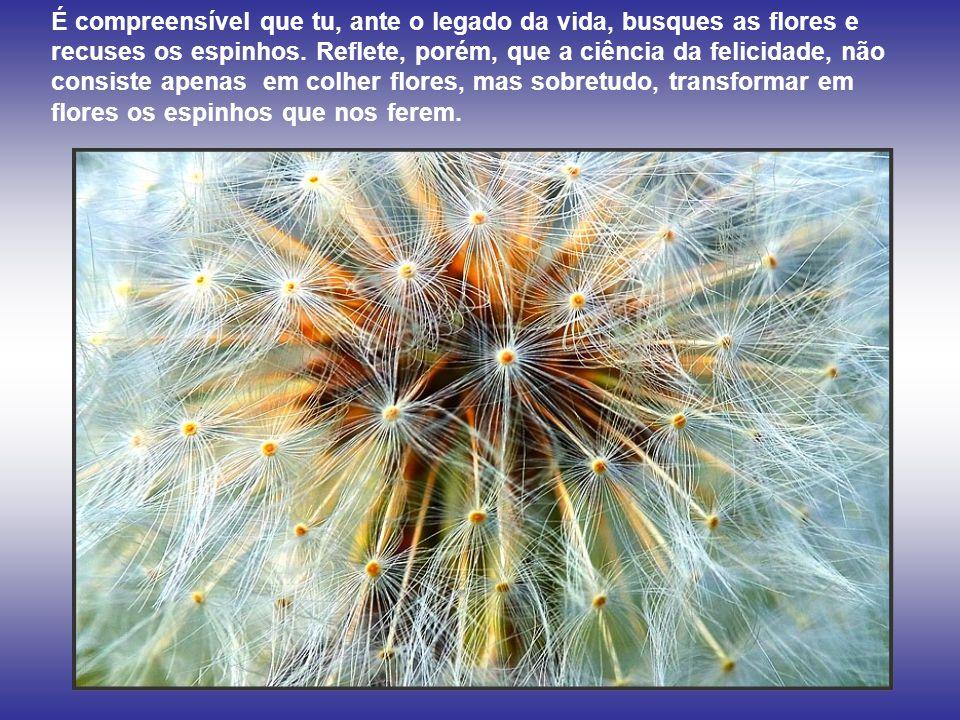 É compreensível que tu, ante o legado da vida, busques as flores e recuses os espinhos.