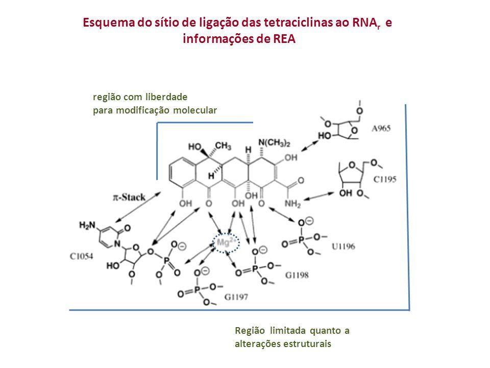 Esquema do sítio de ligação das tetraciclinas ao RNAr e