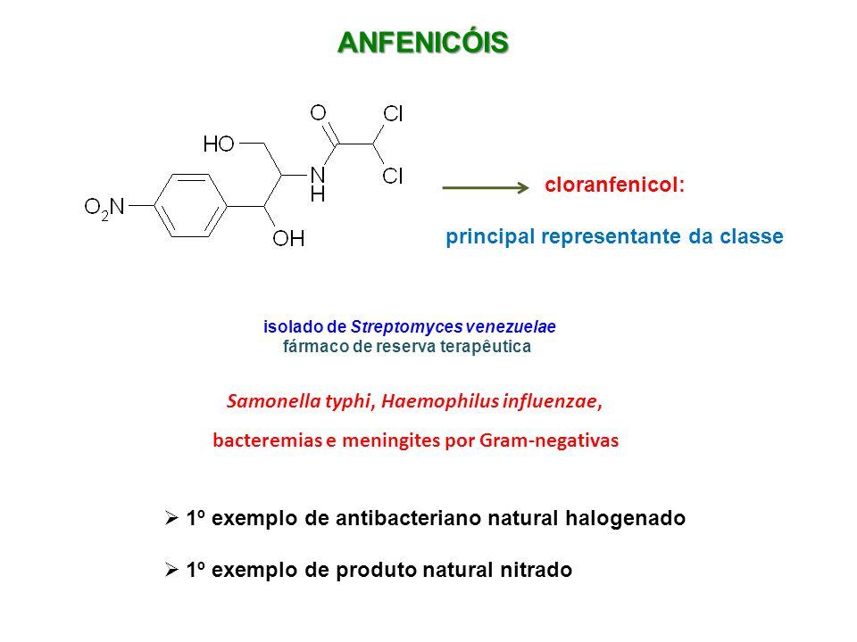 ANFENICÓIS cloranfenicol: principal representante da classe