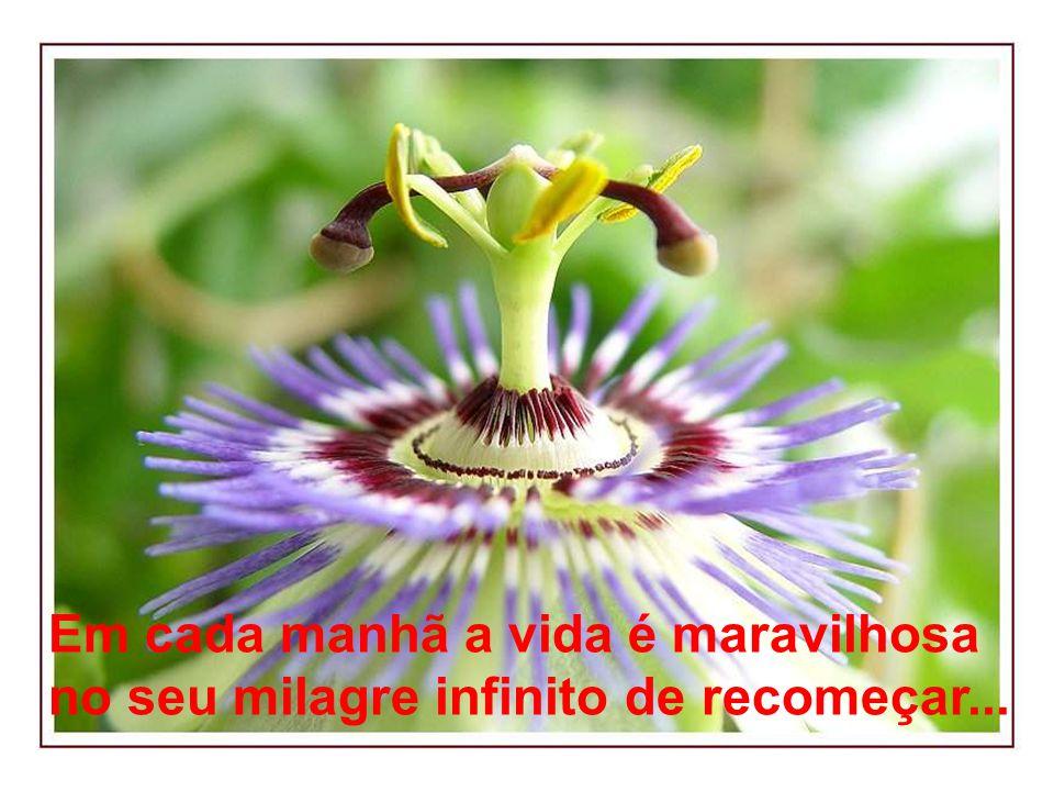Em cada manhã a vida é maravilhosa no seu milagre infinito de recomeçar...