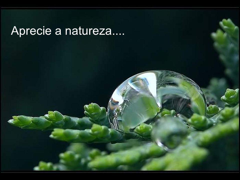 Aprecie a natureza....