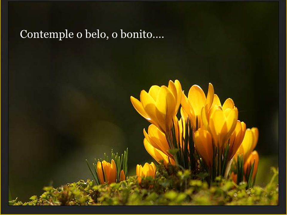 Contemple o belo, o bonito….