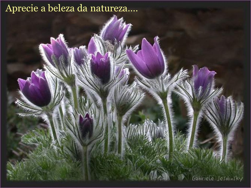 Aprecie a beleza da natureza….
