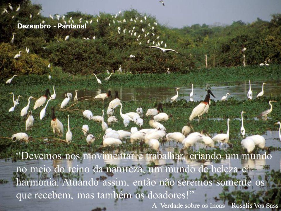 Dezembro - Pantanal