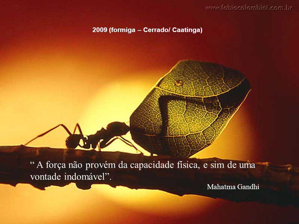 2009 (formiga – Cerrado/ Caatinga)