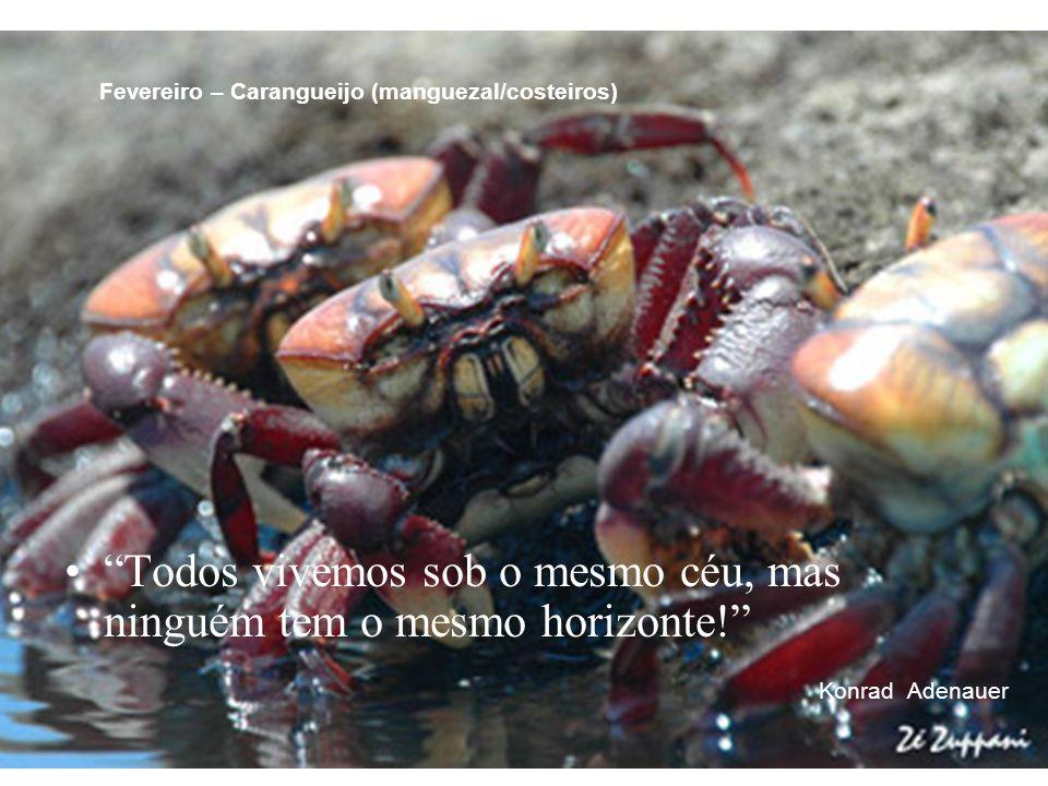 Fevereiro – Carangueijo (manguezal/costeiros)