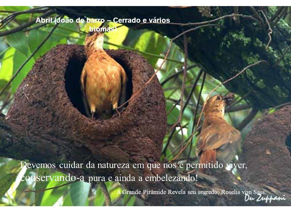 Abril (João de barro – Cerrado e vários biomas)