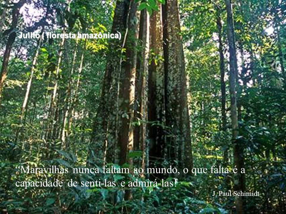 Julho ( floresta amazônica)