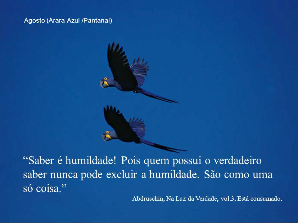 Agosto (Arara Azul /Pantanal)