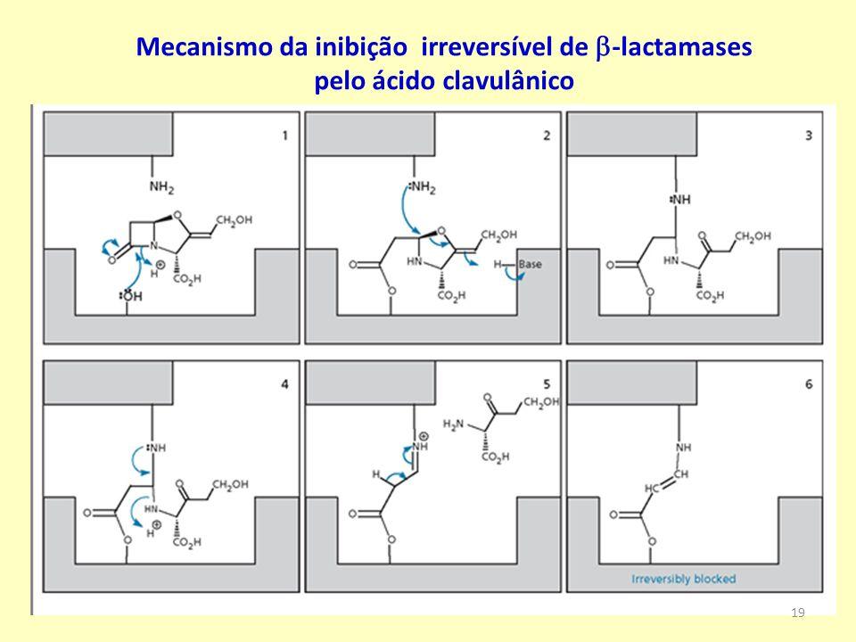 Mecanismo da inibição irreversível de b-lactamases