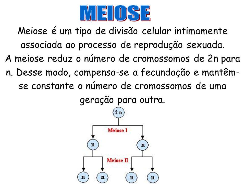 MEIOSE Meiose é um tipo de divisão celular intimamente associada ao processo de reprodução sexuada.