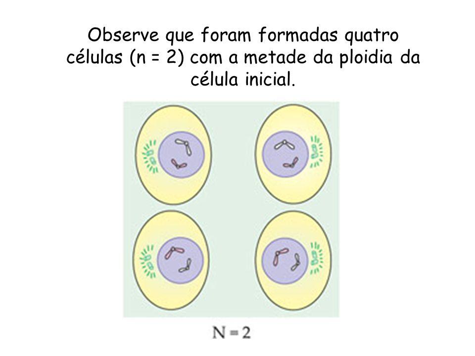 Observe que foram formadas quatro células (n = 2) com a metade da ploidia da célula inicial.
