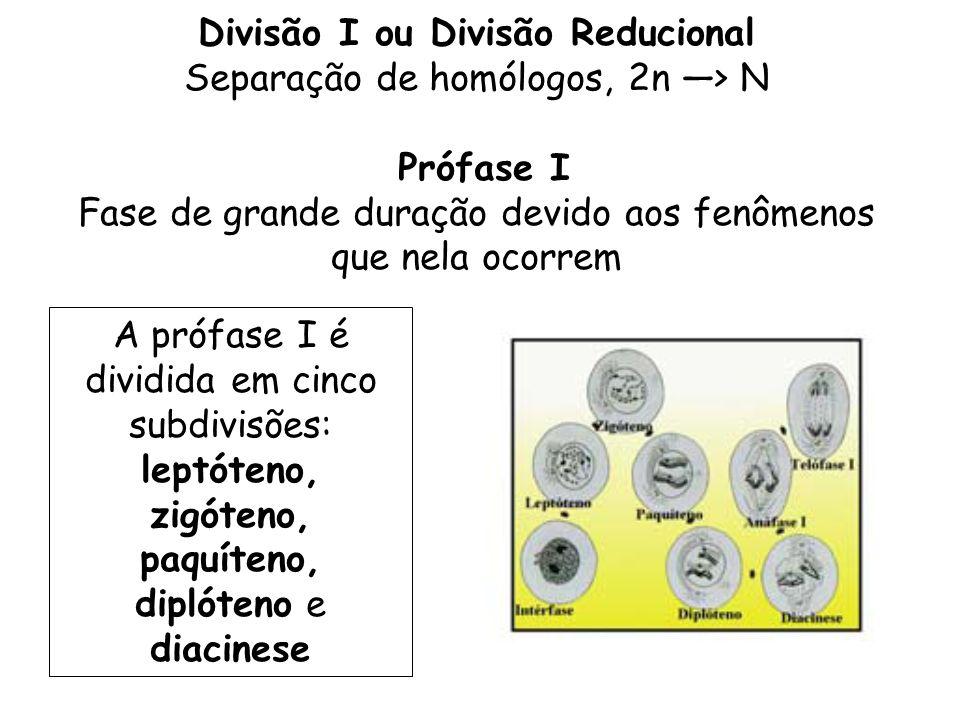 Divisão I ou Divisão Reducional