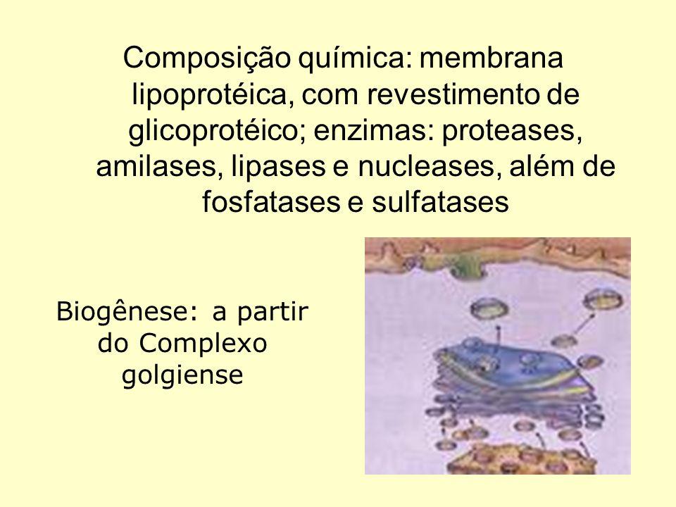 Biogênese: a partir do Complexo golgiense