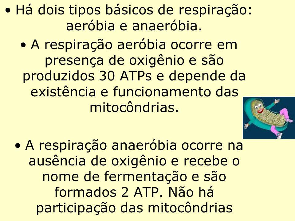 Há dois tipos básicos de respiração: aeróbia e anaeróbia.