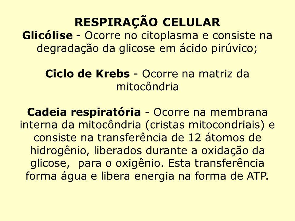 Ciclo de Krebs - Ocorre na matriz da mitocôndria