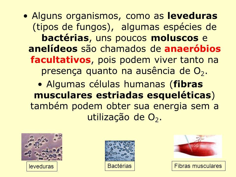 Alguns organismos, como as leveduras (tipos de fungos), algumas espécies de bactérias, uns poucos moluscos e anelídeos são chamados de anaeróbios facultativos, pois podem viver tanto na presença quanto na ausência de O2.