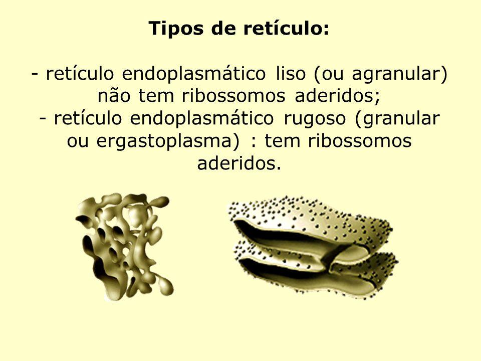 Tipos de retículo:- retículo endoplasmático liso (ou agranular) não tem ribossomos aderidos;