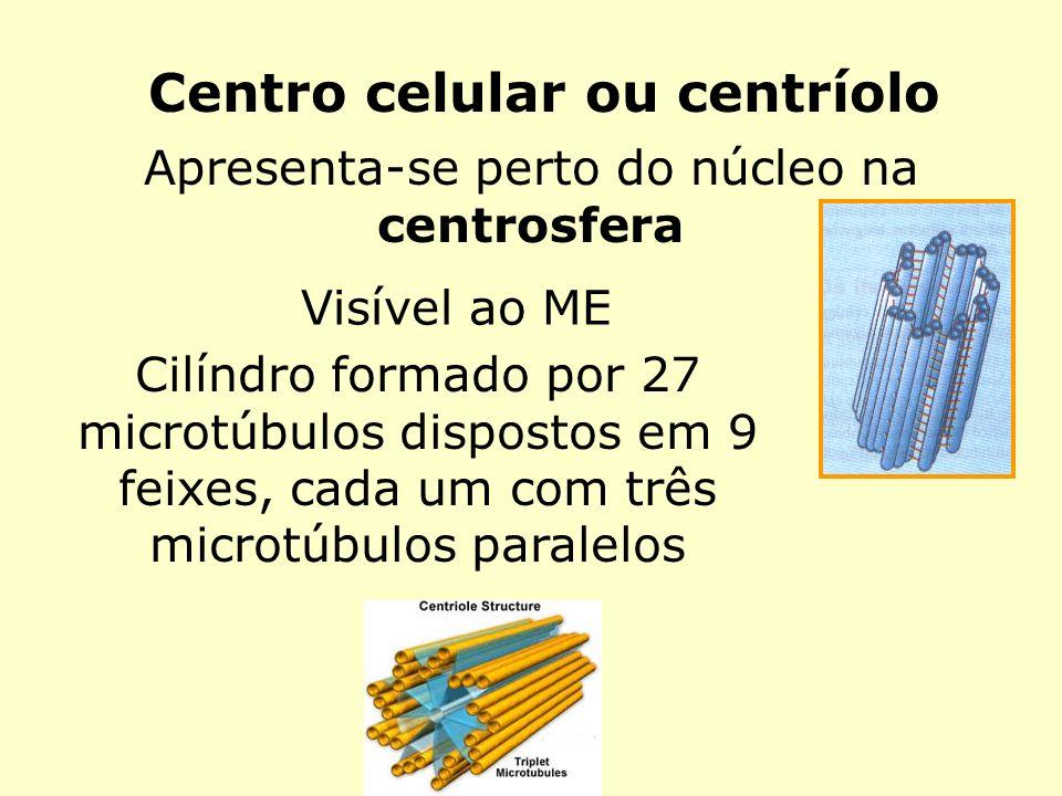 Centro celular ou centríolo