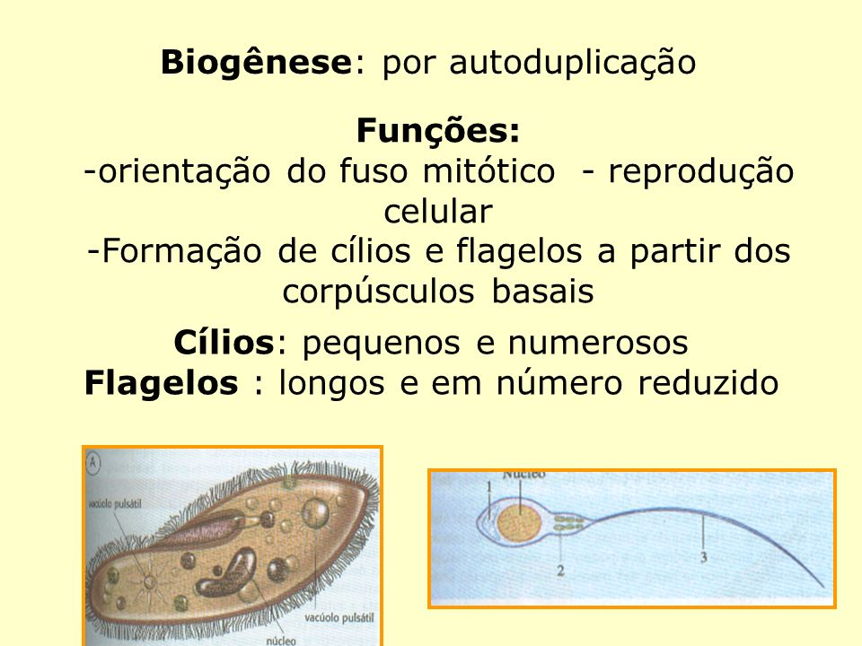 Biogênese: por autoduplicação