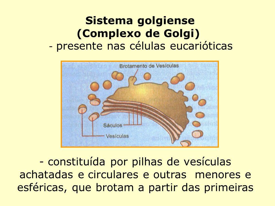 presente nas células eucarióticas