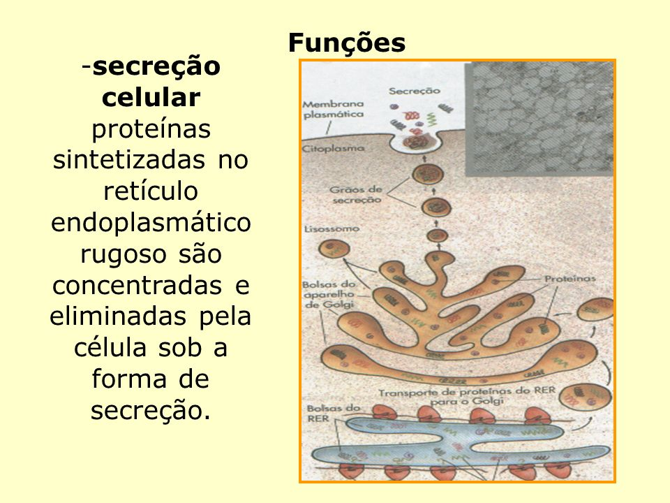 Funções secreção celular.