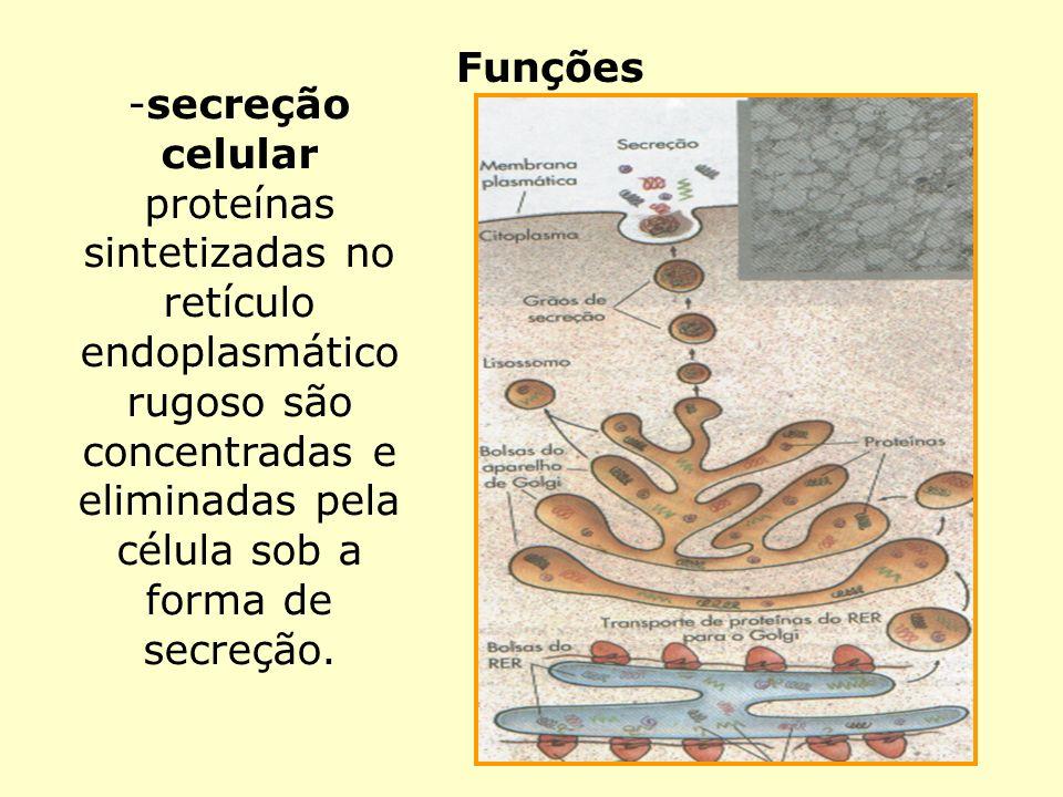 Funçõessecreção celular.