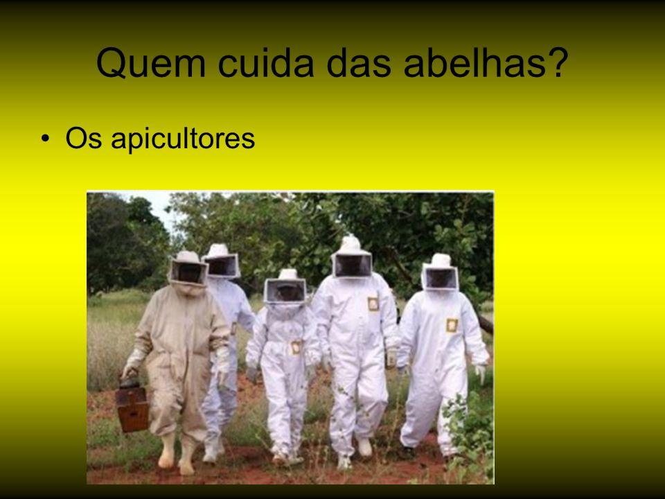 Quem cuida das abelhas Os apicultores