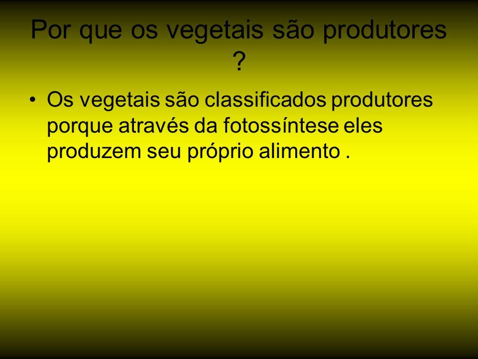 Por que os vegetais são produtores