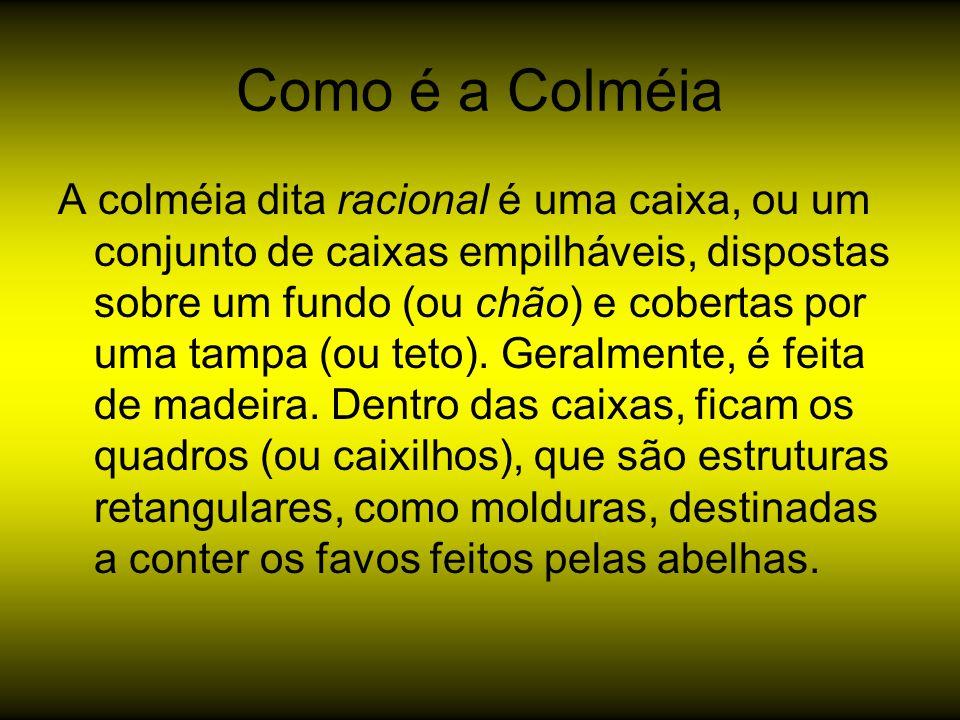 Como é a Colméia