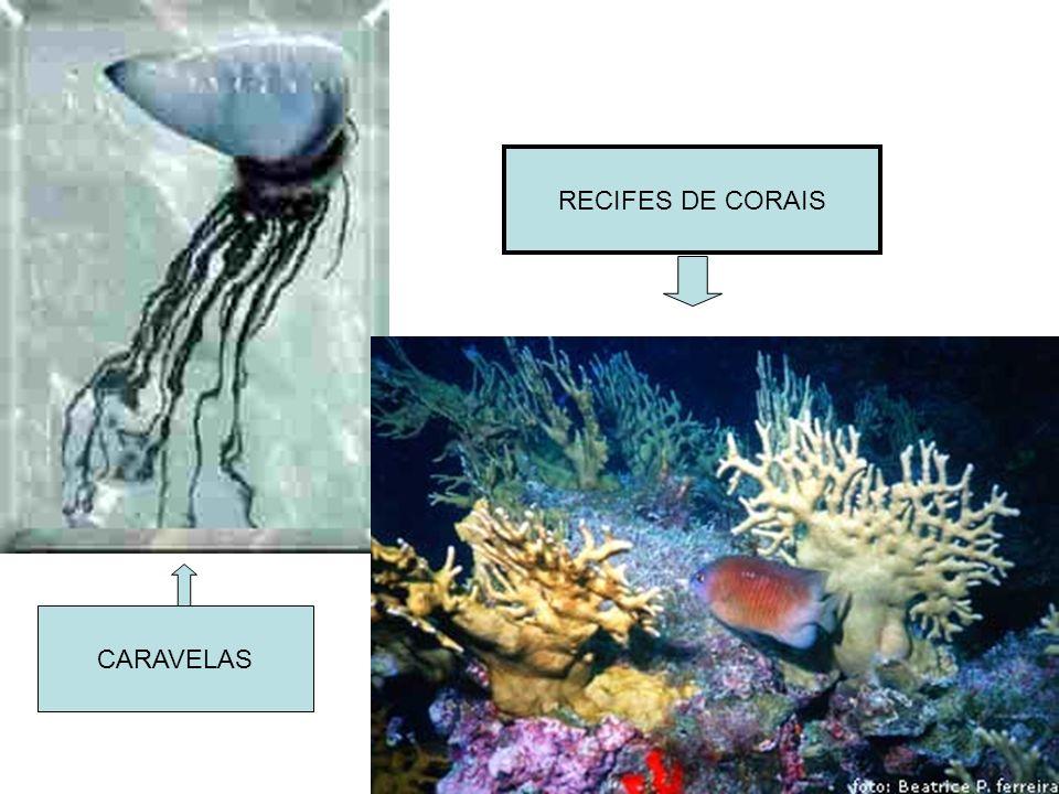 RECIFES DE CORAIS CARAVELAS