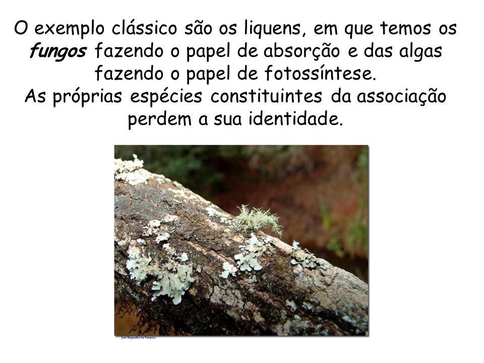 O exemplo clássico são os liquens, em que temos os fungos fazendo o papel de absorção e das algas fazendo o papel de fotossíntese.