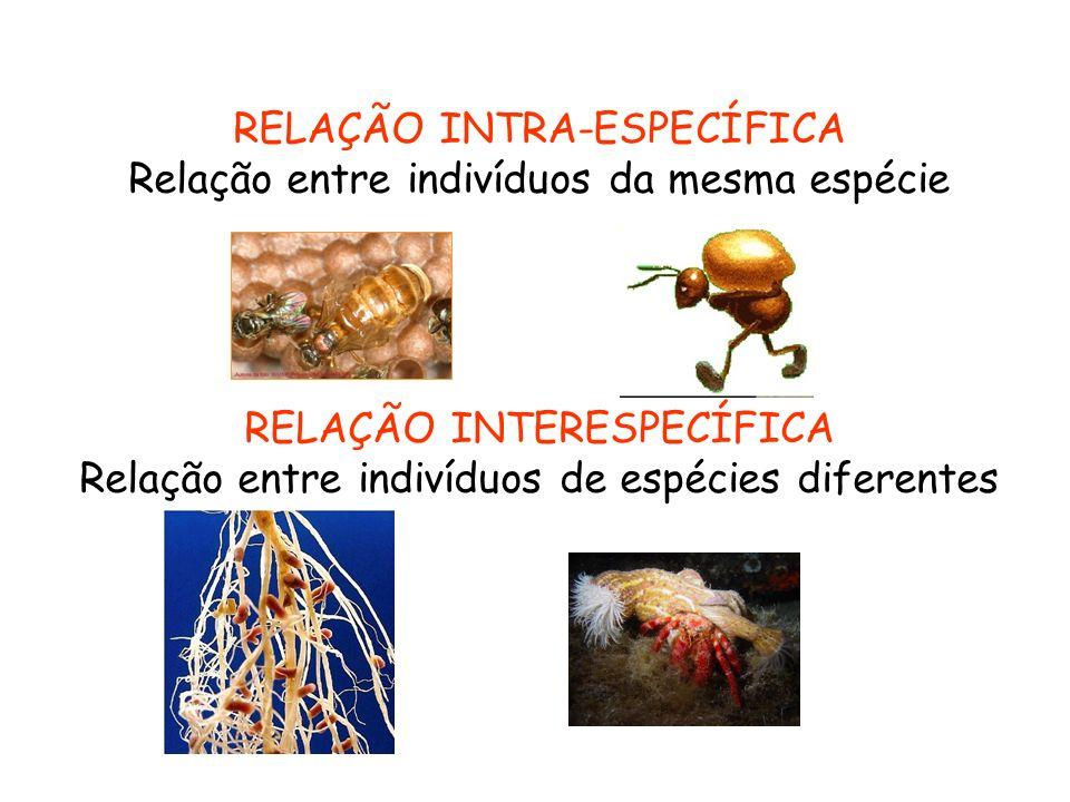 RELAÇÃO INTRA-ESPECÍFICA Relação entre indivíduos da mesma espécie