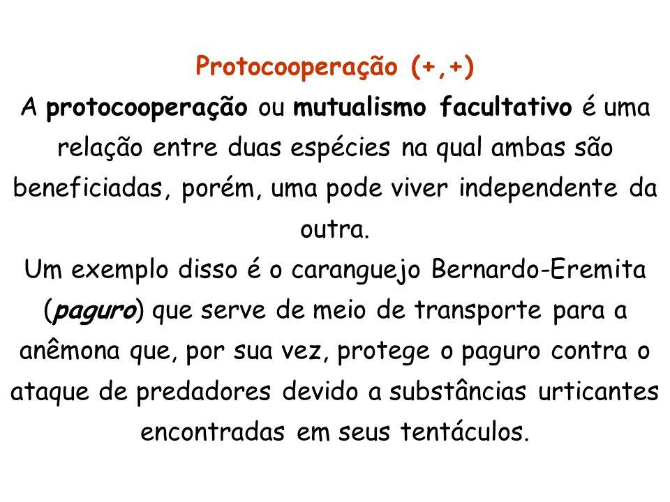Protocooperação (+,+)