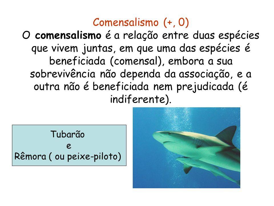 Rêmora ( ou peixe-piloto)
