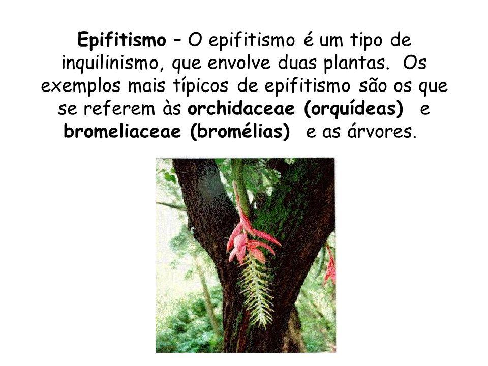 Epifitismo – O epifitismo é um tipo de inquilinismo, que envolve duas plantas. Os exemplos mais típicos de epifitismo são os que se referem às orchidaceae (orquídeas) e bromeliaceae (bromélias) e as árvores.