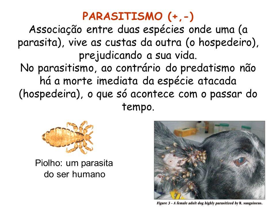 PARASITISMO (+,-)Associação entre duas espécies onde uma (a parasita), vive as custas da outra (o hospedeiro), prejudicando a sua vida.